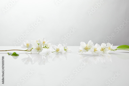 fresh and natural jasmine flowers on white surface - 276303700