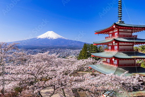 Foto op Canvas Japan 新倉山浅間公園 満開の桜と富士山