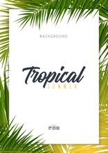 Summer Tropical Palm Leaves. E...