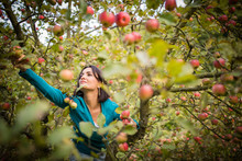 Cute Young Woman Picking Apple...