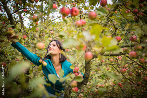 Cute young woman picking apples in an orchard having fun harvesting the ripe fru Fototapete