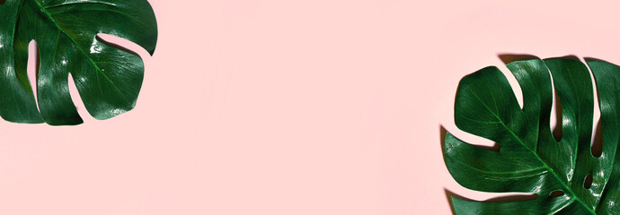 Pale pink background with two exotic large green leaves.