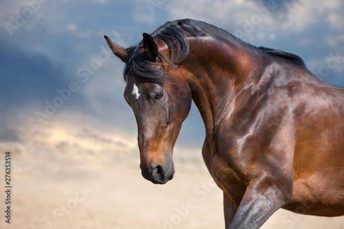 Tuinposter Paarden Bay horse portrait