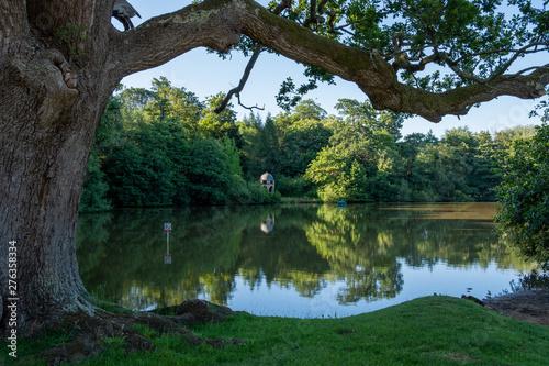 Fotografia, Obraz  MIdhurst Pond