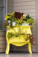 Vertical View Of Pretty Old Two Drawer Wooden Chest Painted Yellow And Upcycled As A Planter Set On The Corner Of A Front Porch In Summertime