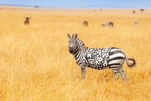 Zebra With QR Code On The Back Concept In Field