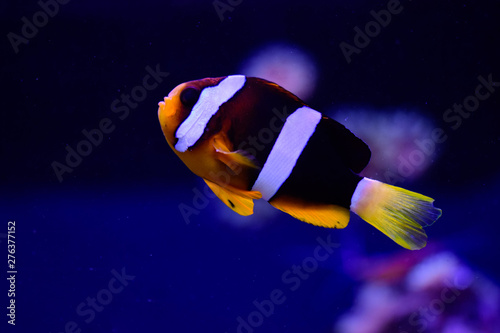Photo  Freshwater and marine Aquarium with fish, plant, schrimp and more