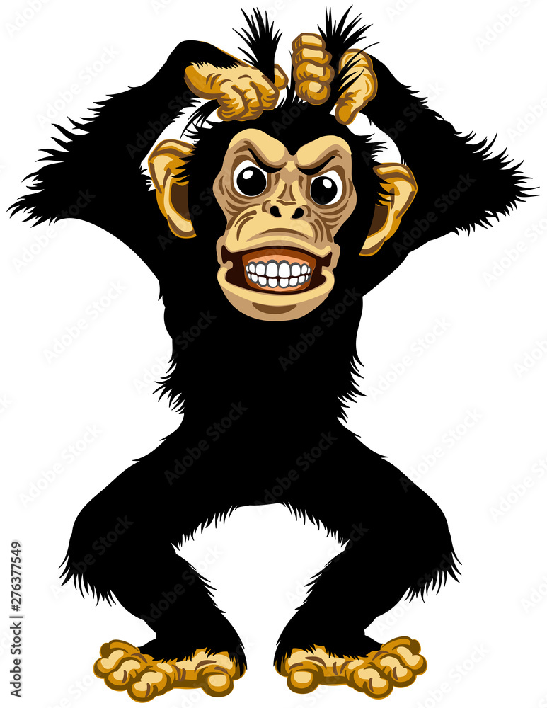 Fototapety, obrazy: cartoon chimp or chimpanzee monkey pulls his fur hair out and showing teeth. Angry or stressed emotion. Standing pose in the front view. Isolated vector illustration