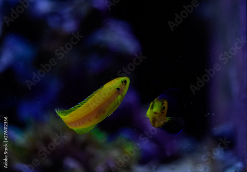 Poster Puma Freshwater and marine Aquarium with fish, plant, schrimp and more