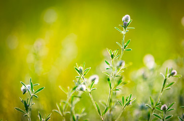nice wild flower meadow