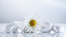 Flower Daisies On A White Stones Pyramid For Spa, A Holiday Concept, Or Chamomile Tea.