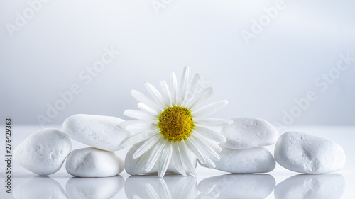 Foto op Canvas Madeliefjes Flower daisies on a white stones pyramid for spa, a holiday concept, or chamomile tea.