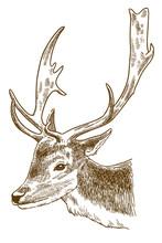 Engraving Illustration Of Spotted Deer Head