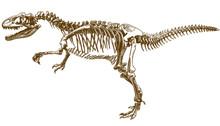 Engraving Illustration Of Tyrannosaurus Skeleton