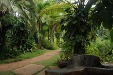 Tropical Garden In Brazil