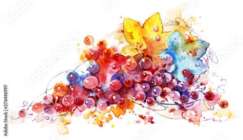 Fototapeta ripe grapes watercolor painting, beautiful illustration. obraz na płótnie