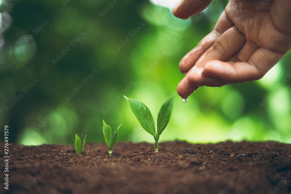 Fototapety, obrazy: Tree plant and Growth In nature And beautiful bokeh