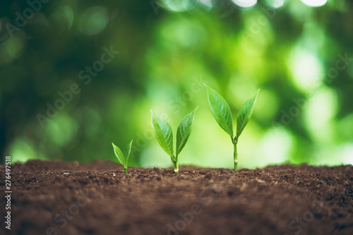 Fotomural Tree plant and Growth In nature And beautiful bokeh