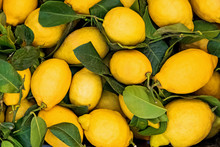 Fresh Juicy Lemons On The Farm...