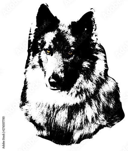 isolated monochrome graphic image of wolf head from tundra with yellow eyes in f Wallpaper Mural