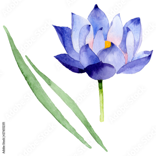 Blue lotus floral botanical flowers. Watercolor background illustration set. Isolated nelumbo illustration element.