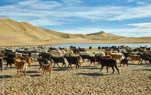 Photo Sands Mongol Els