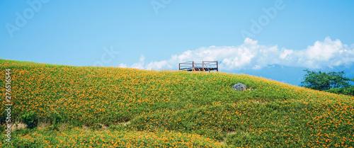 Fototapeta Beautiful orange daylily flower farm on Liushidan mountain (Sixty Rock Mountain)