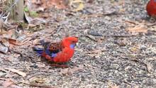 Parrot In Melbourne, Australia