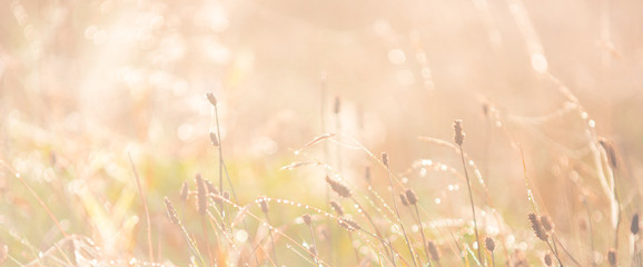 Morning meadow - fresh grass, raindrops, spider webs, sunlight background, the nature background