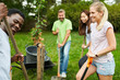 Team Freiwilliger pflanzt einen Baum
