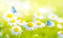 Flying Butterflies On Daisy Flowers Field