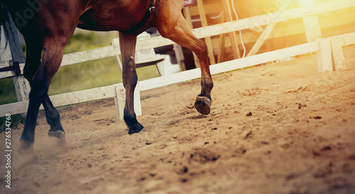 Photo Legs of a sports horse galloping in the arena.