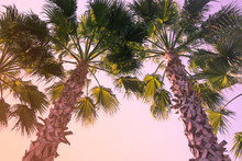 Palm Trees At Sky Background. ...