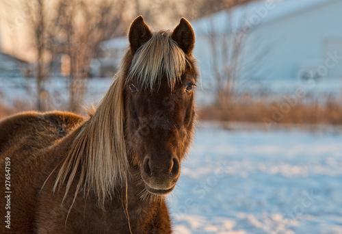 Fotografía  horse in winter