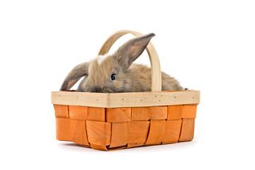 Baby Kaninchen im Osterkorb