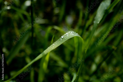 gouttes de pluie sur un brin d'herbe Canvas Print