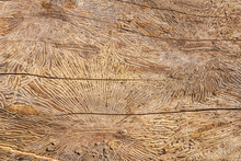 Pattern On Tree Trunk Log Afte...