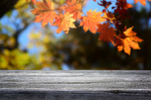 Beautiful Blurred Nature Autumn Forest Background And Empty Wooden Table.