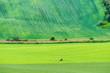 Leinwanddruck Bild - Summer green field in Moravia