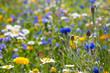 canvas print picture - Blühende Wiesen, blühendes Feld, blühender Weg, um Insektensterben und Tötung zu verhindern und entgegenzuwirken.