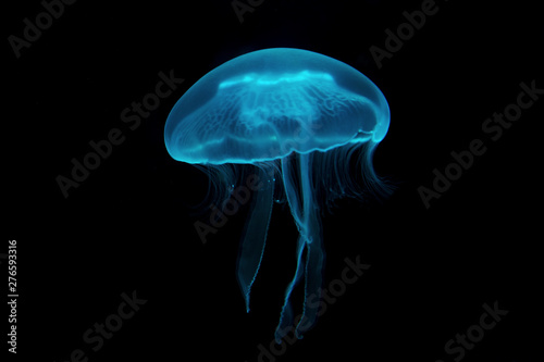 Photo jellyfish in water