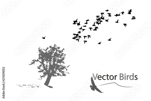 Photo Alone tree and flying birds. Vector image. White background.