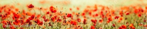 Fotobehang Bloemenwinkel Panorama of Red Poppy Field, selective focus