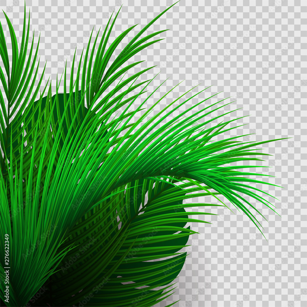 Fototapety, obrazy: Green tropical plants isolated on transparent background.