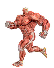 Muscle Maps Of A Strong Man Ru...