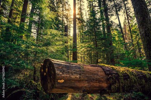 Obraz na plátně  Olympic National Forest, Olympic National Park