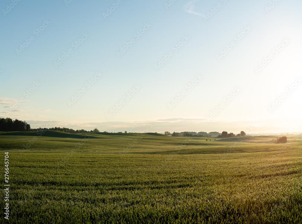 Fototapeta Fields in Skåne, Sweden