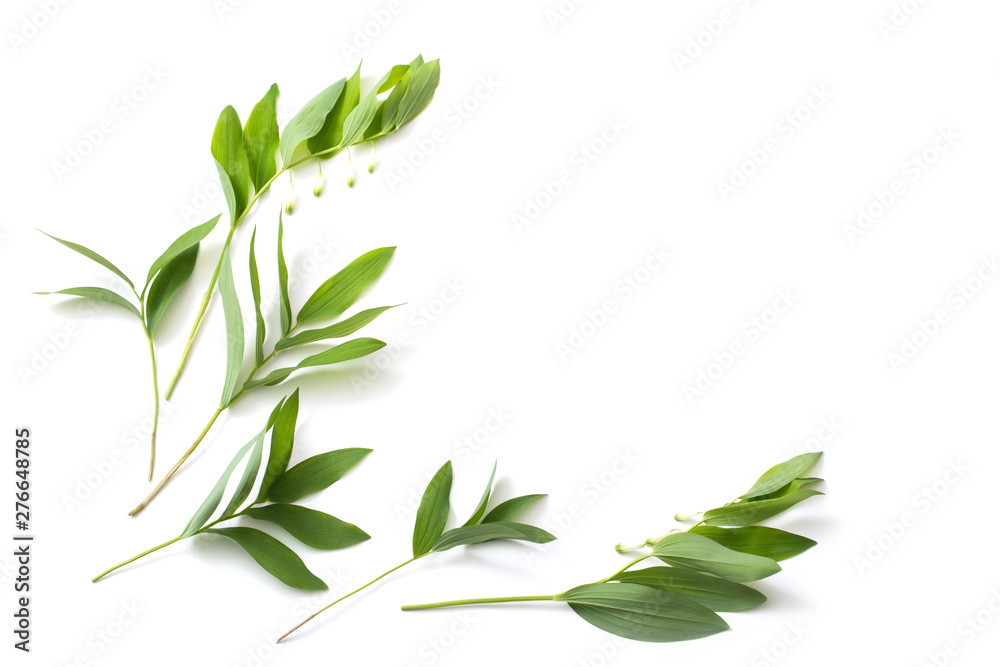 Fototapety, obrazy: plants on white background