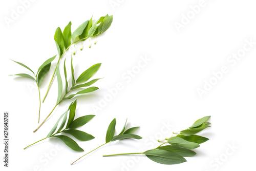 Fotografía  plants on white background