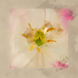 Digital watercolour painting of Stunning artistic close up image of pink flower